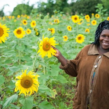 Tanzania Boost Sunflower Industry With TZS 3.5 Bn